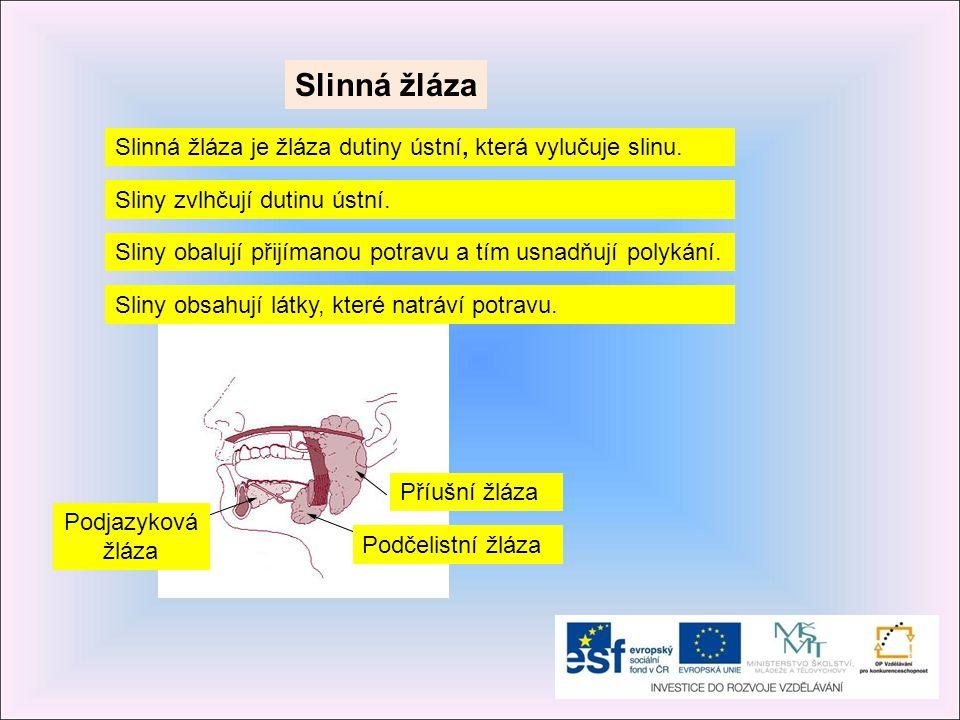Slinná žláza Slinná žláza je žláza dutiny ústní, která vylučuje slinu. Sliny obsahují látky, které natráví potravu. Sliny zvlhčují dutinu ústní. Sliny