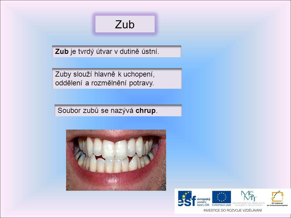 Zub je tvrdý útvar v dutině ústní. Zuby slouží hlavně k uchopení, oddělení a rozmělnění potravy. Soubor zubů se nazývá chrup. Zub