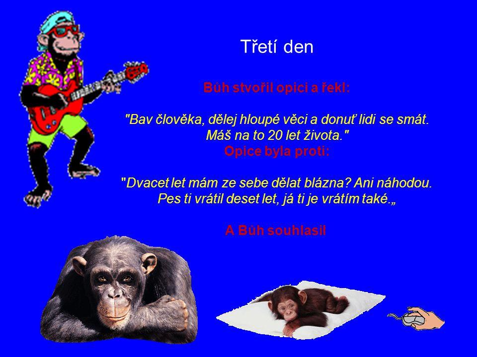 Třetí den Bůh stvořil opici a řekl: Bav člověka, dělej hloupé věci a donuť lidi se smát.