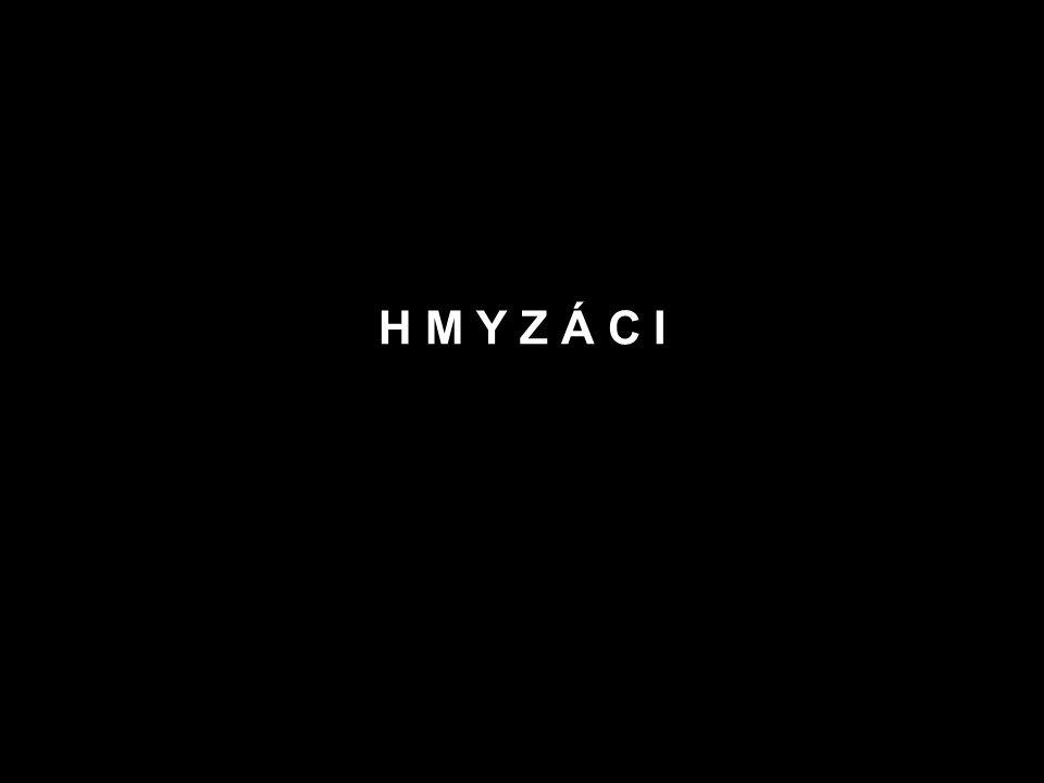H M Y Z Á C I