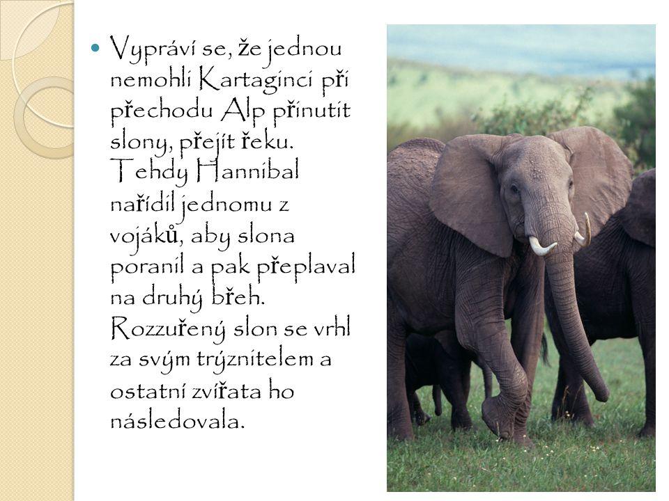 Vypráví se, ž e jednou nemohli Kartaginci p ř i p ř echodu Alp p ř inutit slony, p ř ejít ř eku. Tehdy Hannibal na ř ídil jednomu z voják ů, aby slona