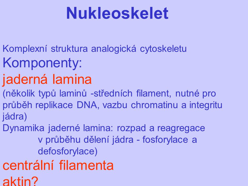Nukleoskelet Komplexní struktura analogická cytoskeletu Komponenty: jaderná lamina (několik typů laminů -středních filament, nutné pro průběh replikac