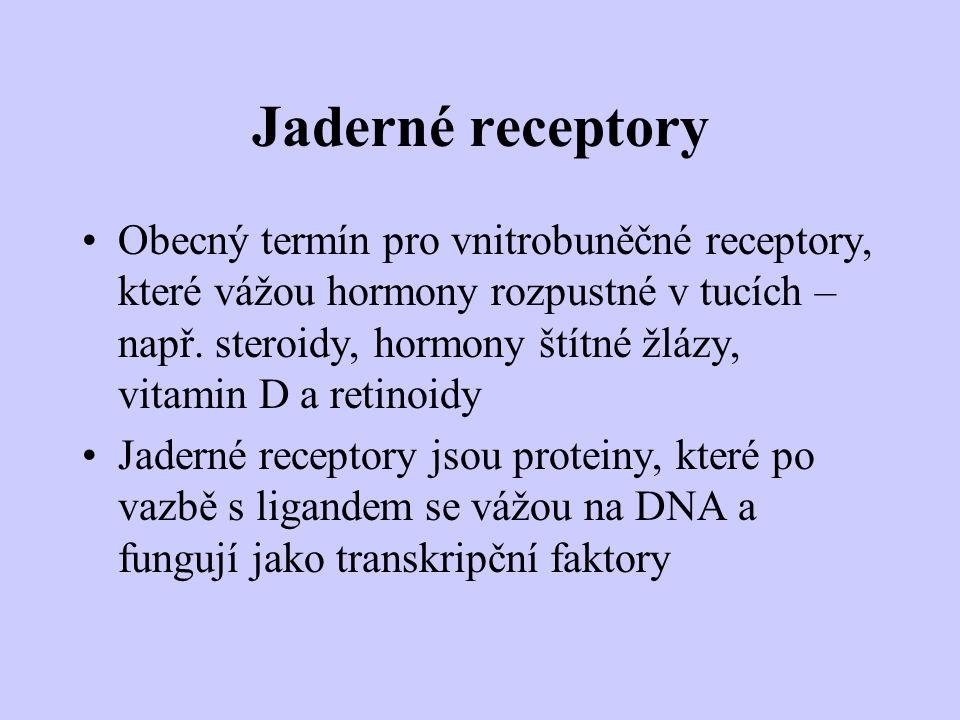 Jaderné receptory Obecný termín pro vnitrobuněčné receptory, které vážou hormony rozpustné v tucích – např. steroidy, hormony štítné žlázy, vitamin D