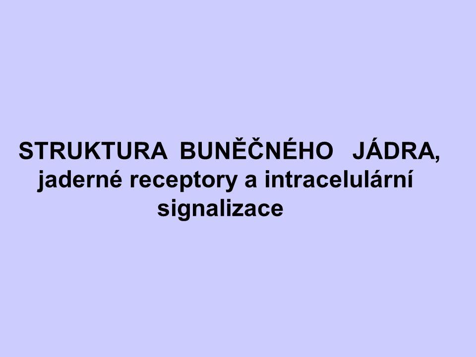 STRUKTURA BUNĚČNÉHO JÁDRA, jaderné receptory a intracelulární signalizace