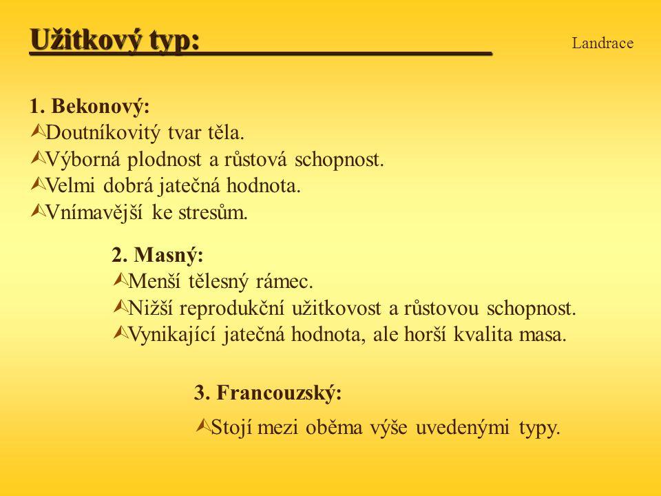 Užitkový typ: Užitkový typ: Landrace 1.Bekonový: Ù Doutníkovitý tvar těla.