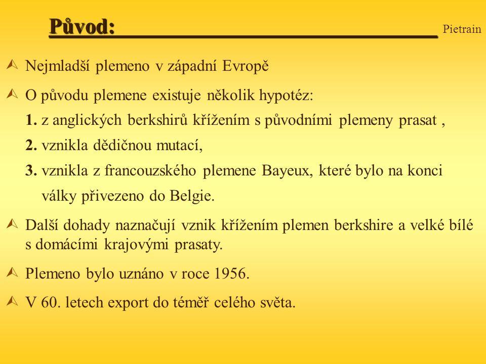 Původ: Původ: Pietrain ÙNejmladší plemeno v západní Evropě ÙO původu plemene existuje několik hypotéz: 1.