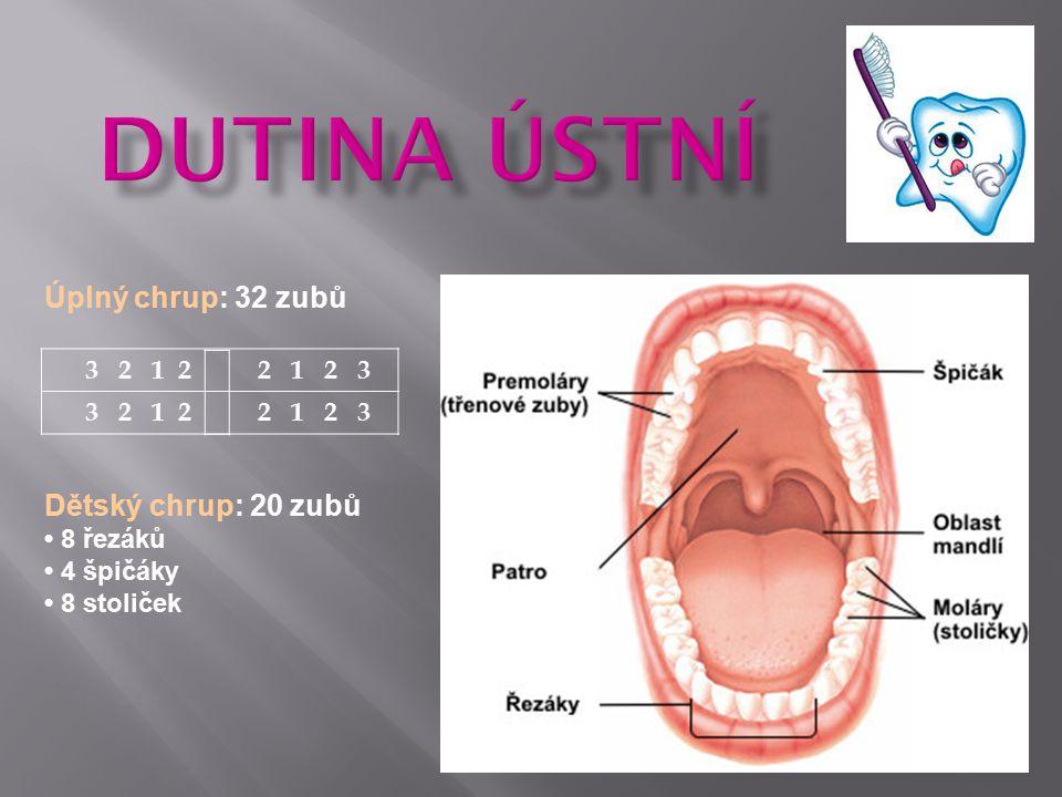 Úplný chrup: 32 zubů 3 2 1 2 2 1 2 3 Dětský chrup: 20 zubů 8 řezáků 4 špičáky 8 stoliček