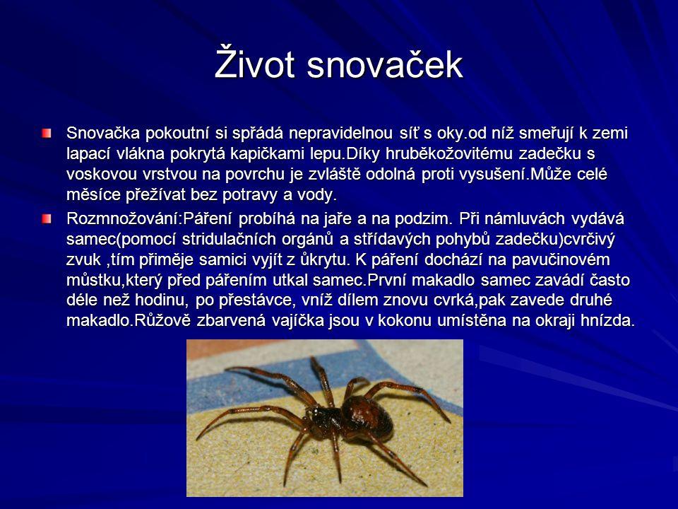 Život snovaček Snovačka pokoutní si spřádá nepravidelnou síť s oky.od níž smeřují k zemi lapací vlákna pokrytá kapičkami lepu.Díky hruběkožovitému zad
