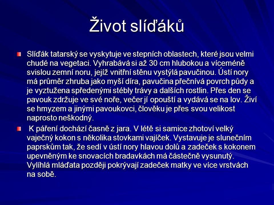 Život slíďáků Slíďák tatarský se vyskytuje ve stepních oblastech, které jsou velmi chudé na vegetaci. Vyhrabává si až 30 cm hlubokou a víceméně svislo