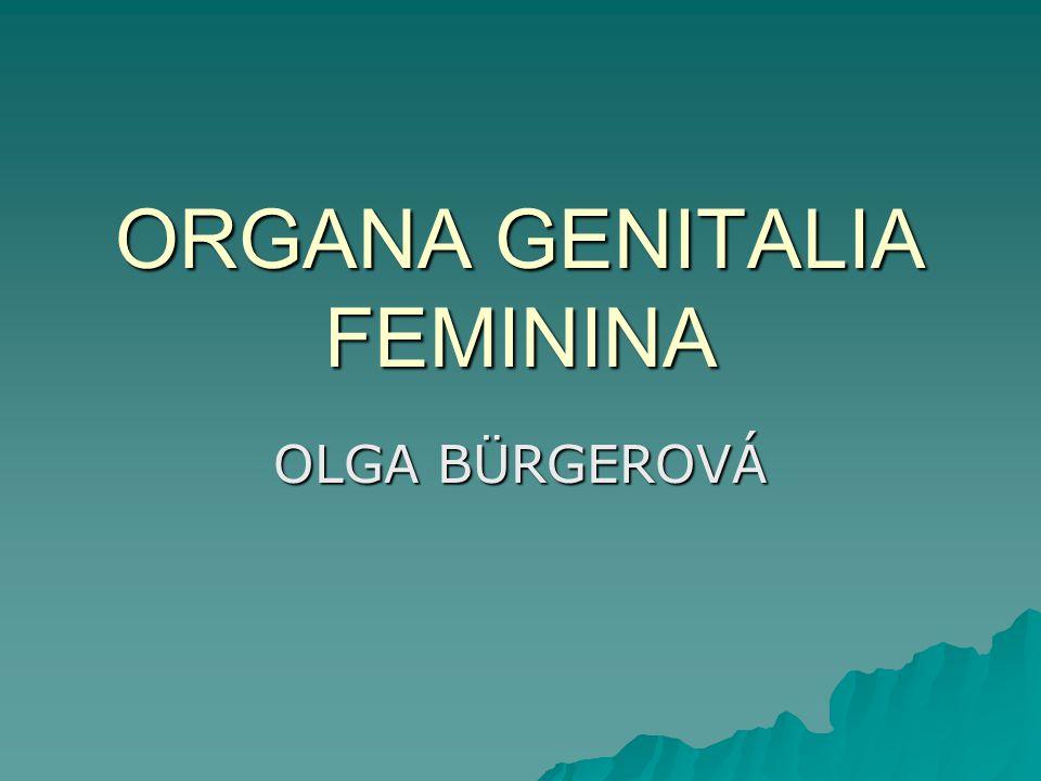 ORGANA GENITALIA FEMININA OLGA BÜRGEROVÁ