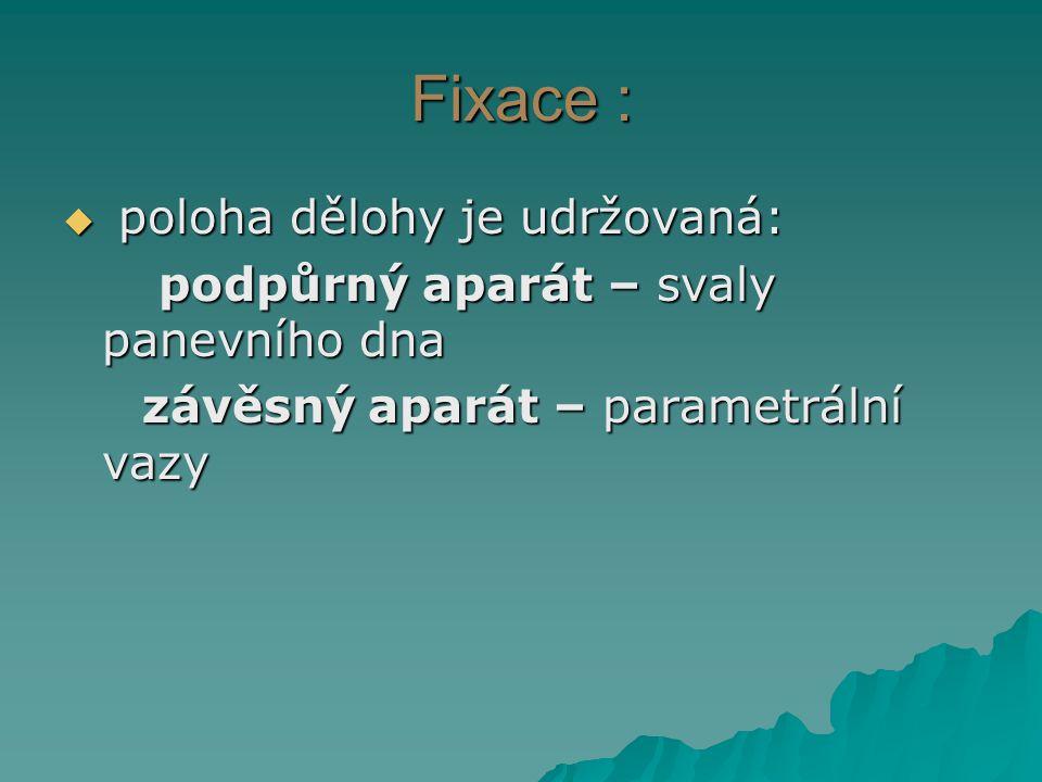 Fixace :  poloha dělohy je udržovaná: podpůrný aparát – svaly panevního dna podpůrný aparát – svaly panevního dna závěsný aparát – parametrální vazy