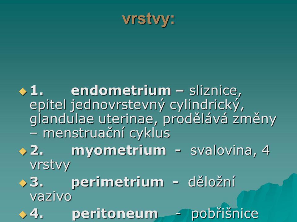 vrstvy:  1. endometrium – sliznice, epitel jednovrstevný cylindrický, glandulae uterinae, prodělává změny – menstruační cyklus  2. myometrium - sval