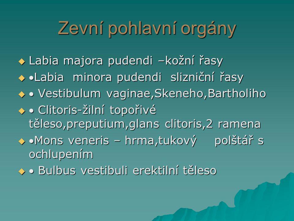 Zevní pohlavní orgány  Labia majora pudendi –kožní řasy  Labia minora pudendi slizniční řasy   Vestibulum vaginae,Skeneho,Bartholiho   Clitoris