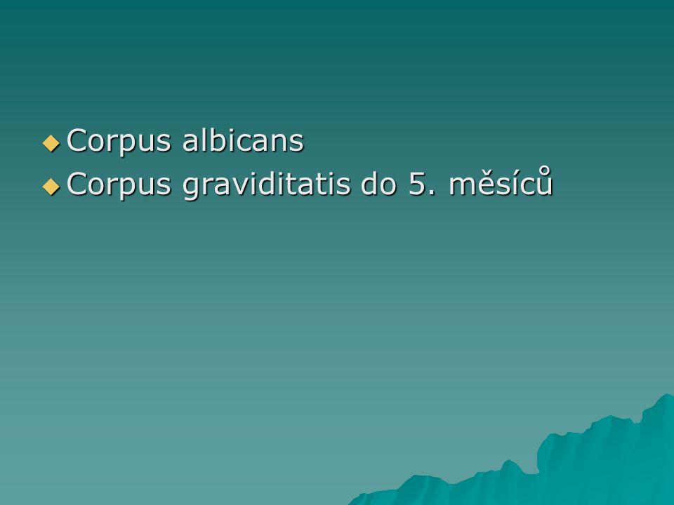  Corpus albicans  Corpus graviditatis do 5. měsíců