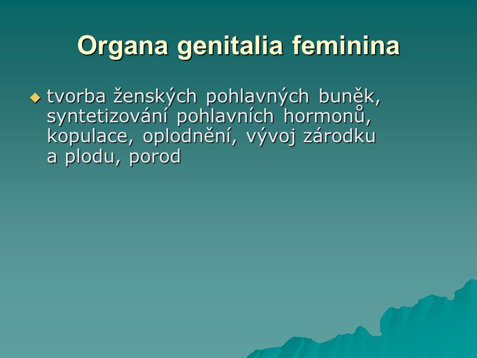 Organa genitalia feminina  tvorba ženských pohlavných buněk, syntetizování pohlavních hormonů, kopulace, oplodnění, vývoj zárodku a plodu, porod