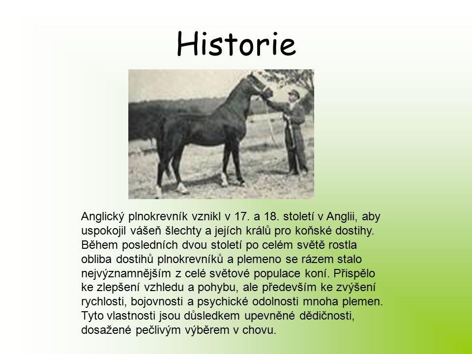 Historie Anglický plnokrevník vznikl v 17. a 18.