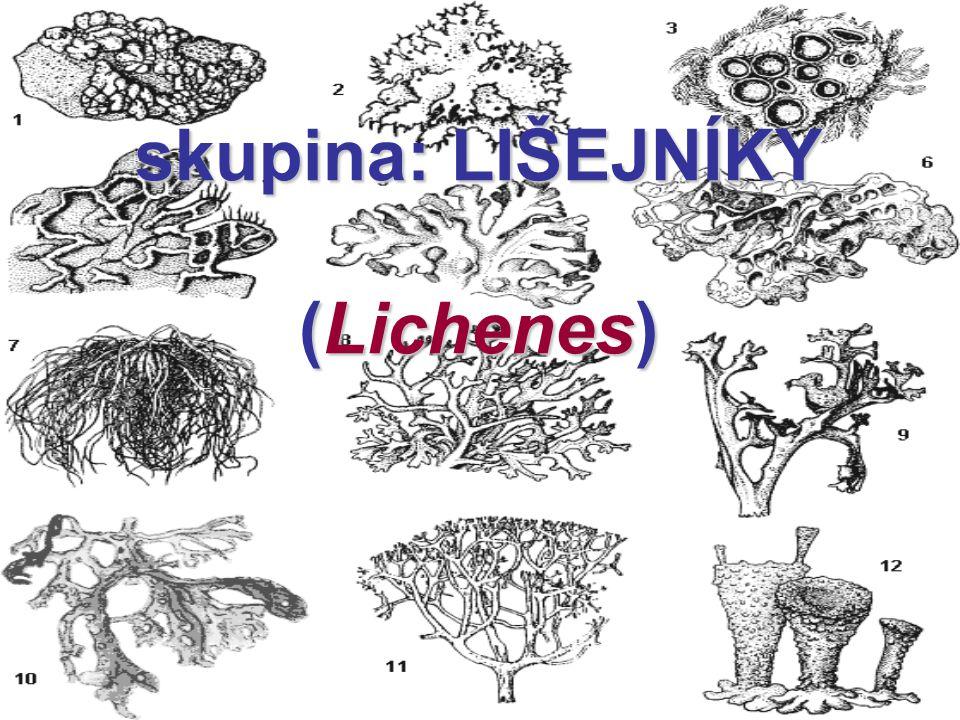 skupina: LIŠEJNÍKY (Lichenes)