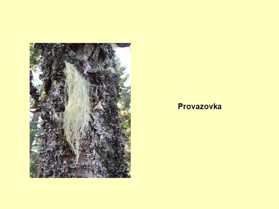 Provazovka