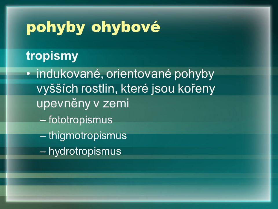 pohyby ohybové tropismy indukované, orientované pohyby vyšších rostlin, které jsou kořeny upevněny v zemi –fototropismus –thigmotropismus –hydrotropismus
