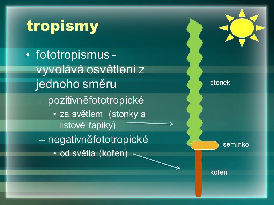 tropismy fototropismus - vyvolává osvětlení z jednoho směru –pozitivněfototropické za světlem (stonky a listové řapíky) –negativněfototropické od světla (kořen) stonek kořen semínko
