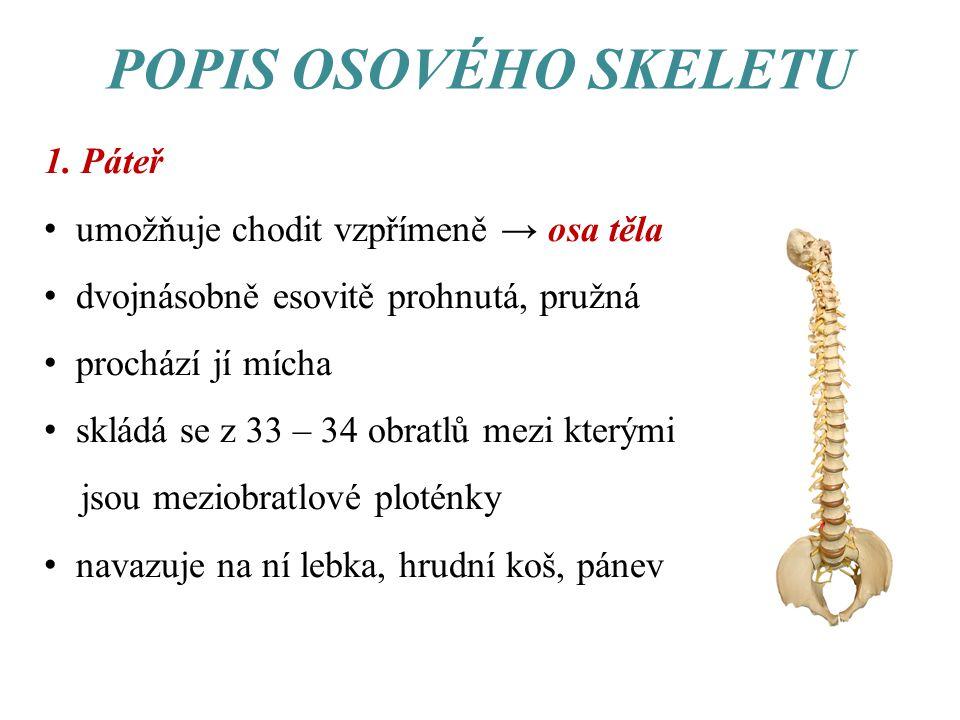krční obratle – 7 ks hrudní obratle – 12 ks bederní obratle – 5 ks křížové obratle – 5 ks kostrční obratle – 4-5 ks → srůstají v kost kostrční Lidská páteř - boční pohled.