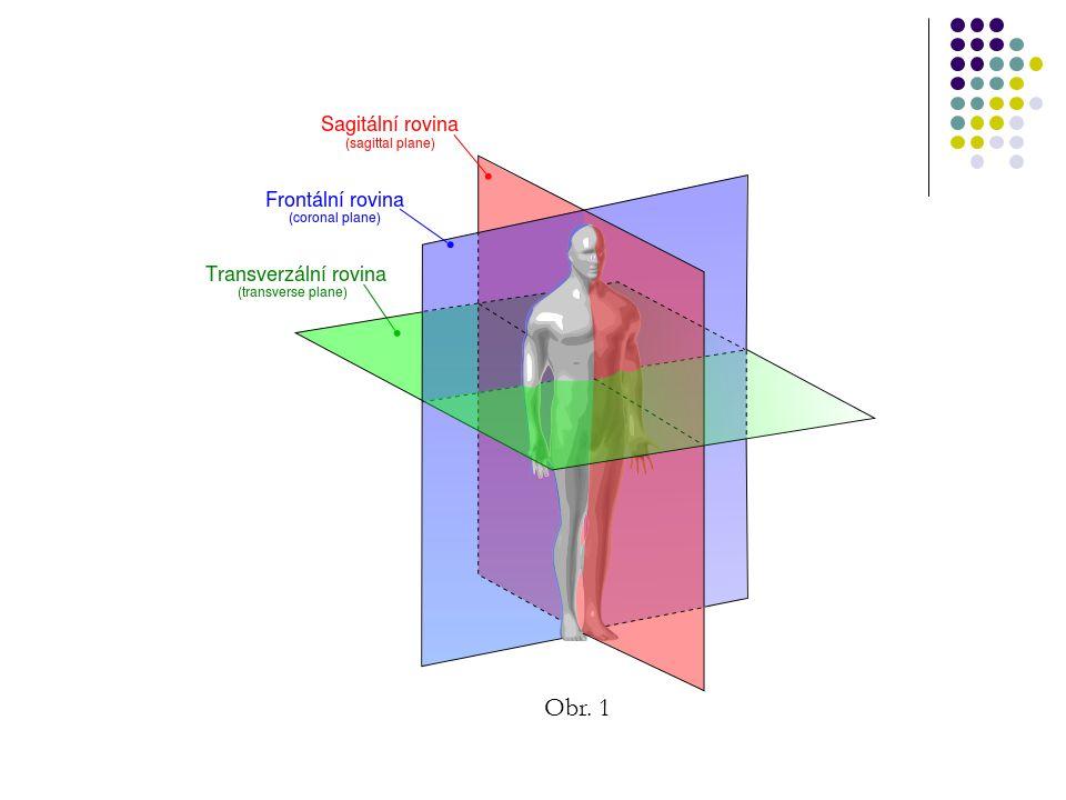 Rovina mediální Střední, svislá - je kolmá na frontální rovinu a dělí tělo na pravou a levou polovinu.