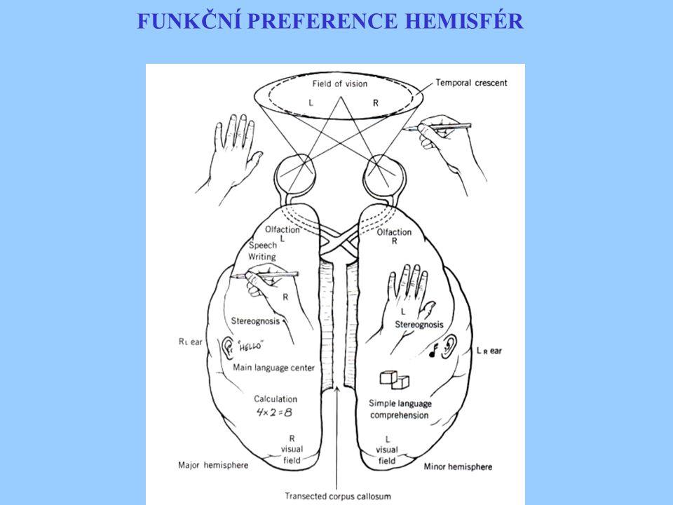 FUNKČNÍ PREFERENCE HEMISFÉR