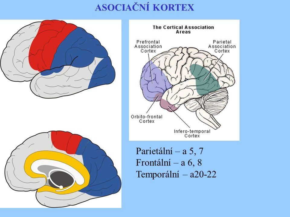 ASOCIAČNÍ KORTEX Parietální – a 5, 7 Frontální – a 6, 8 Temporální – a20-22