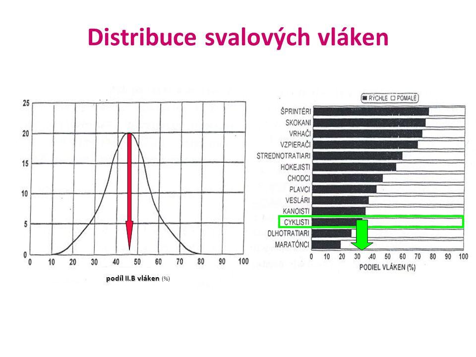 podíl II.B vláken podíl II.B vláken (%) Distribuce svalových vláken
