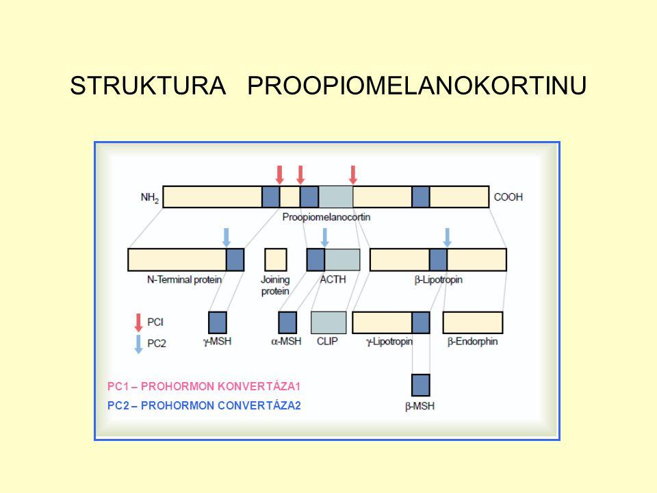 STRUKTURA PROOPIOMELANOKORTINU PC1 – PROHORMON KONVERTÁZA1 PC2 – PROHORMON CONVERTÁZA2