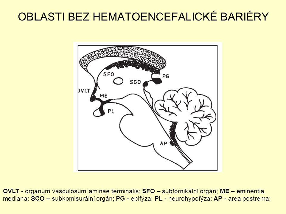 OBLASTI BEZ HEMATOENCEFALICKÉ BARIÉRY OVLT - organum vasculosum laminae terminalis; SFO – subfornikální orgán; ME – eminentia mediana; SCO – subkomisu