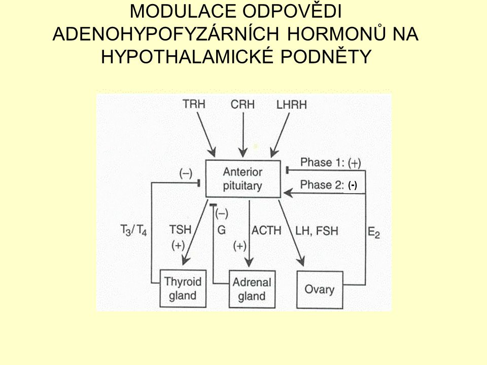 MODULACE ODPOVĚDI ADENOHYPOFYZÁRNÍCH HORMONŮ NA HYPOTHALAMICKÉ PODNĚTY (-)