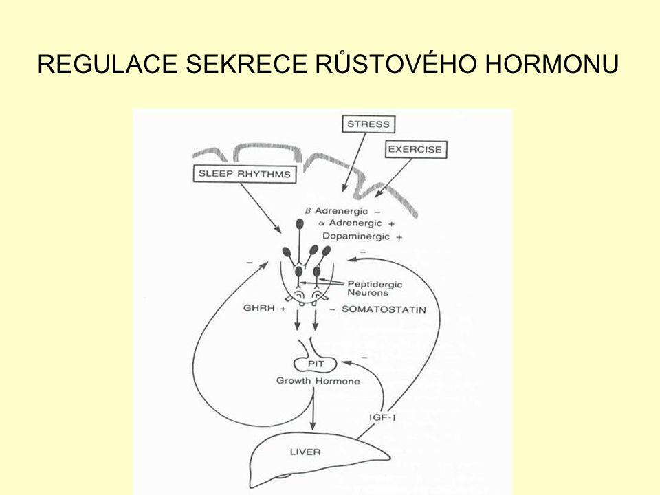 REGULACE SEKRECE RŮSTOVÉHO HORMONU
