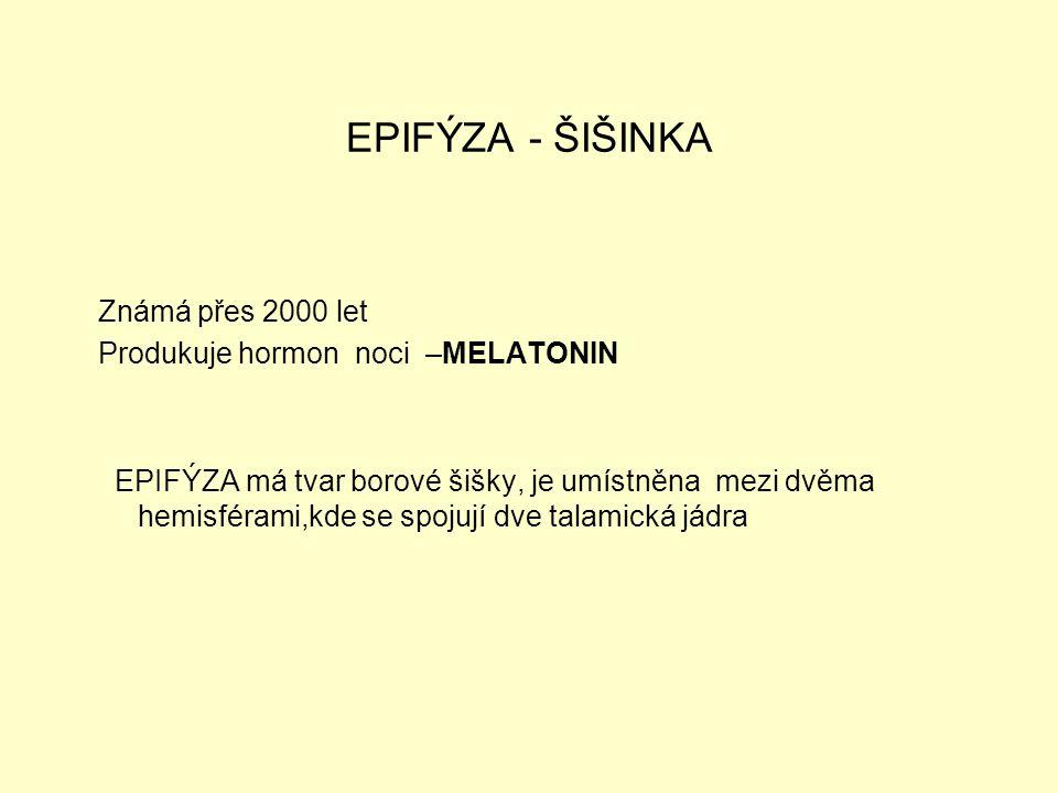 EPIFÝZA - ŠIŠINKA Známá přes 2000 let Produkuje hormon noci –MELATONIN EPIFÝZA má tvar borové šišky, je umístněna mezi dvěma hemisférami,kde se spojuj