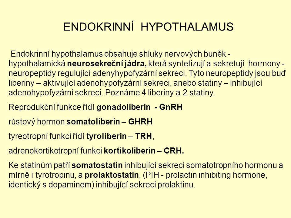 ENDOKRINNÍ HYPOTHALAMUS Endokrinní hypothalamus obsahuje shluky nervových buněk - hypothalamická neurosekreční jádra, která syntetizují a sekretují ho