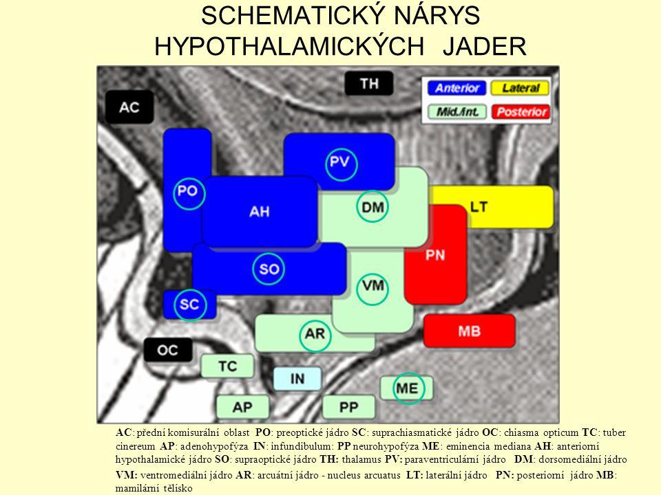 SCHEMATICKÝ NÁRYS HYPOTHALAMICKÝCH JADER AC: přední komisurální oblast PO: preoptické jádro SC: suprachiasmatické jádro OC: chiasma opticum TC: tuber
