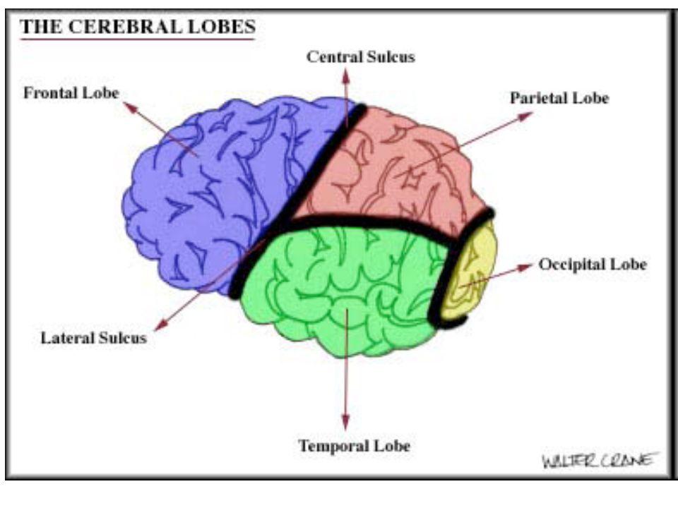 2.Sémantické zpracování mluvených slov -Spojuje slyšené zvuky s tím, co víme o jejich významu.