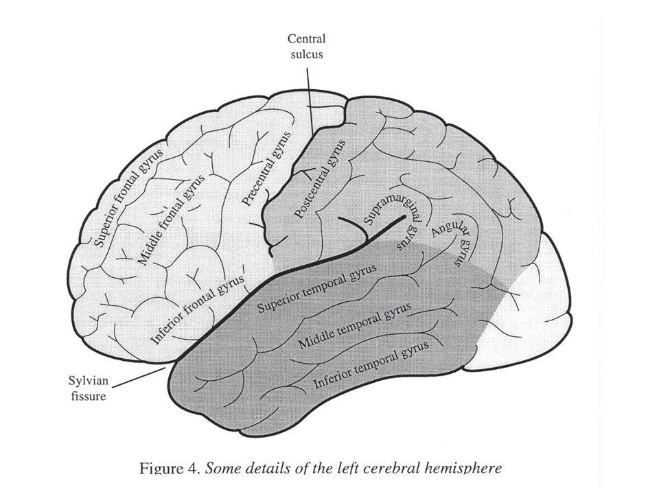 Přehled vytvořen z více než 100 fMRI studií jazyka.