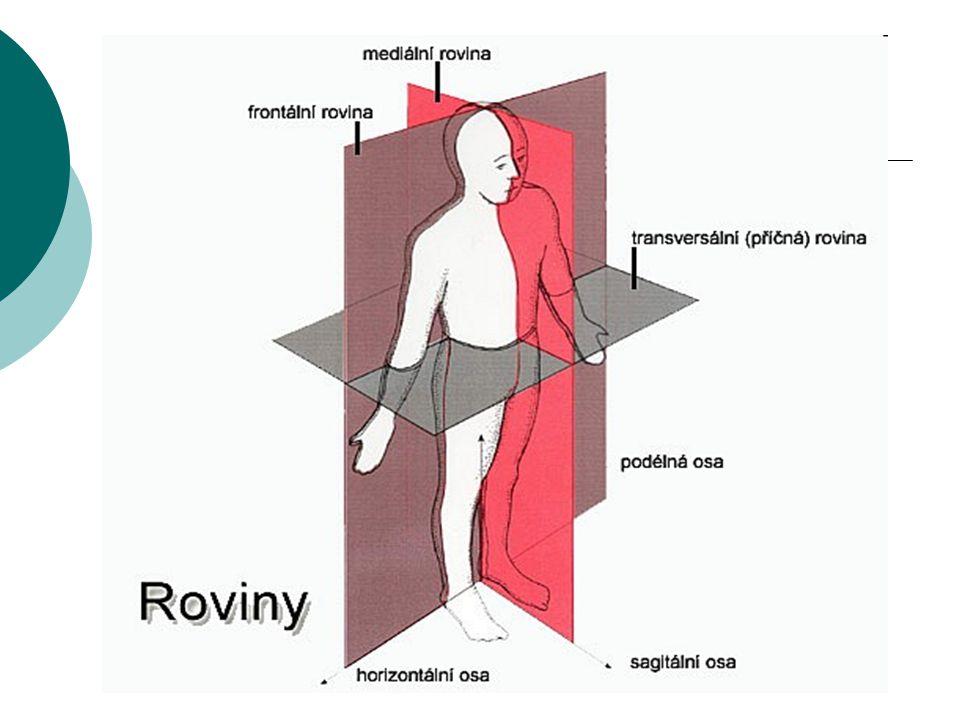 Směry na těle:  KRANIÁLNÍ – směr k hlavě  KAUDÁLNÍ – směr od hlavy, k dolní části těla  PROXIMÁLNÍ – blíže trupu  DISTÁLNÍ – blíže k prstům, vzdálenější od trupu  SUPERIOR – horní (směr k hlavě)  INFERIOR – dolní (směr mířící ke konci trupu)  ANTERIOR – přední (směr břišní)  POSTERIOR – zadní (směr hřbetní)