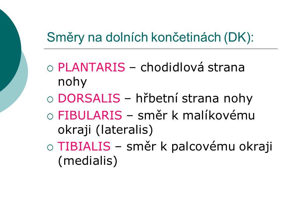 Směry na dolních končetinách (DK):  PLANTARIS – chodidlová strana nohy  DORSALIS – hřbetní strana nohy  FIBULARIS – směr k malíkovému okraji (lateralis)  TIBIALIS – směr k palcovému okraji (medialis)