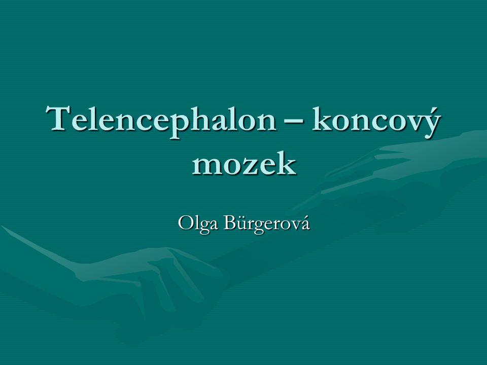 Telencephalon – koncový mozek Olga Bürgerová