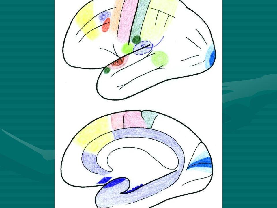 Korové analyzátory: Motorická oblast – čelní lalok, pohyby svalůMotorická oblast – čelní lalok, pohyby svalů Brocovo centrum – centrum pro řeč a psaní, zadní úsek čelního lalokuBrocovo centrum – centrum pro řeč a psaní, zadní úsek čelního laloku Primární sensitivní centrum – dotek, poloha, pohybPrimární sensitivní centrum – dotek, poloha, pohyb Wernickeovo senzorické centrum – porozumění mluvené řečiWernickeovo senzorické centrum – porozumění mluvené řeči Zrakové centrum – týlní lalokZrakové centrum – týlní lalok