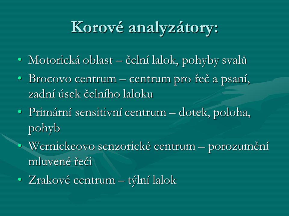 Korové analyzátory: Motorická oblast – čelní lalok, pohyby svalůMotorická oblast – čelní lalok, pohyby svalů Brocovo centrum – centrum pro řeč a psaní