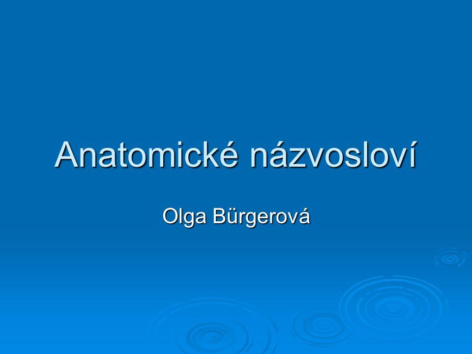Anatomické názvosloví Olga Bürgerová