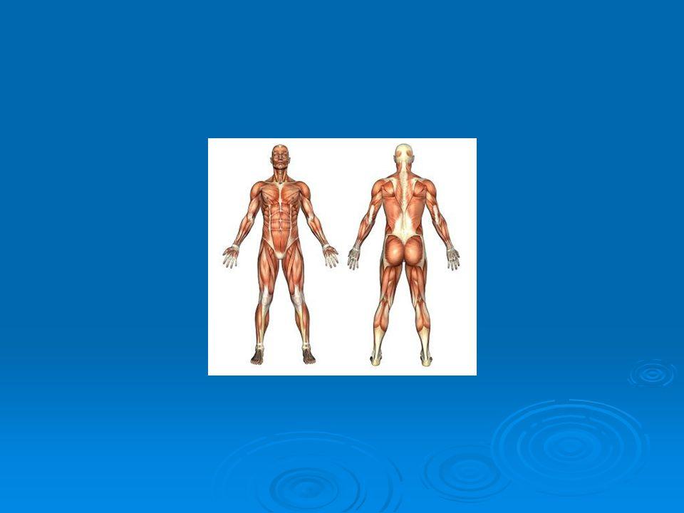 Označení rovin těla
