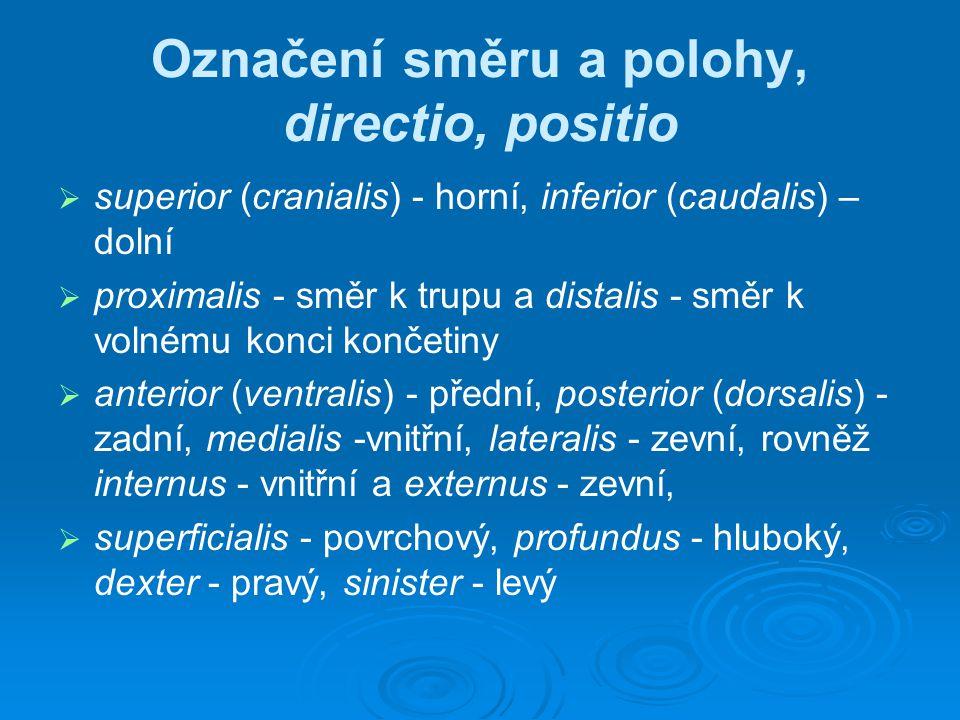 Označení směru a polohy, directio, positio   superior (cranialis) - horní, inferior (caudalis) – dolní   proximalis - směr k trupu a distalis - sm