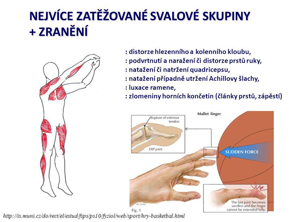 NEJVÍCE ZATĚŽOVANÉ SVALOVÉ SKUPINY + ZRANĚNÍ http://is.muni.cz/do/rect/el/estud/fsps/ps10/fyziol/web/sport/hry-basketbal.html : : distorze hlezenního