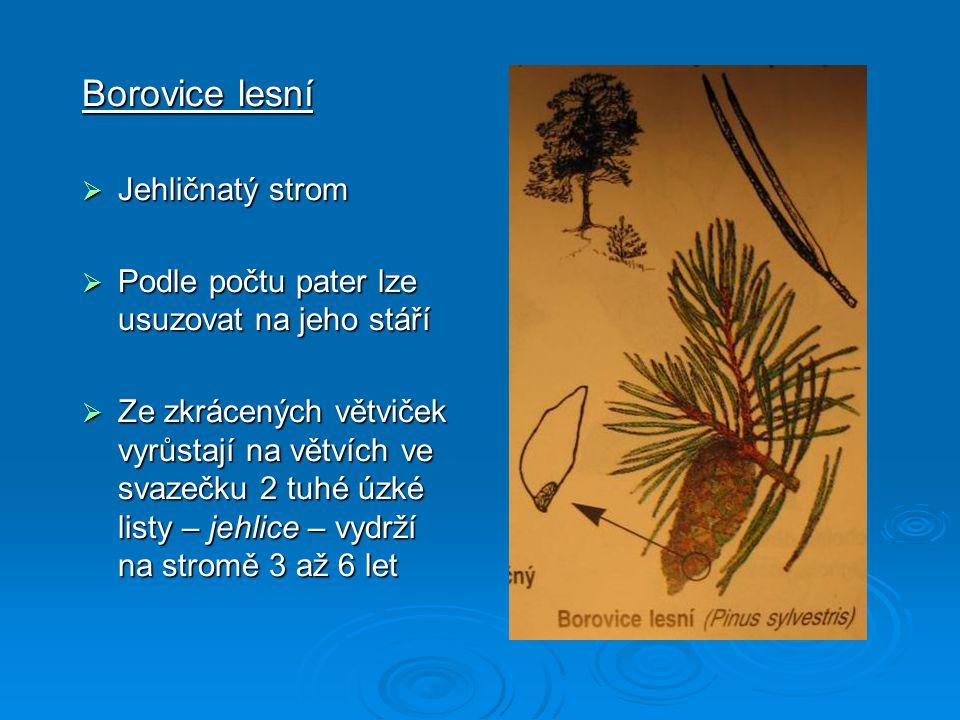  Jedle bělokorá – strom; jehlice ve dvou řadách (na rubu má dva bělavé proužky); kmen stromu je hladký a šedobílý; šišky se rozpadají ještě na stromě a rostou vzpřímeně  Modřín opadavý – strom; jehlice má měkké a krátké, ve svazečcích po 15 – 40; na podzim opadává; šišky jsou malé a vejčité  Jalovec obecný – keř i strom; jehlice má ostře pichlavé, ve svazcích po třech; semena jsou v modročerných zdužnatělých šišticích (připomínají bobule); je chráněný  Smrk ztepilý - strom; má hranaté, špičaté a na větvích všestranně rozestavěné jehlice; šišky jsou visící, protáhlé a nerozpadavé