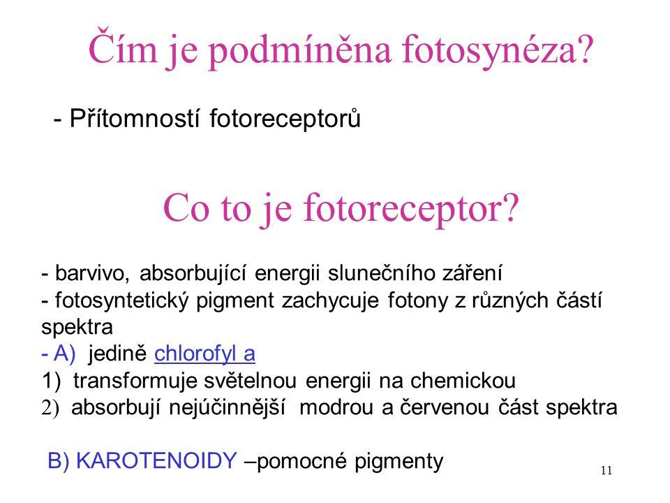 11 Čím je podmíněna fotosynéza? - Přítomností fotoreceptorů Co to je fotoreceptor? - barvivo, absorbující energii slunečního záření - fotosyntetický p