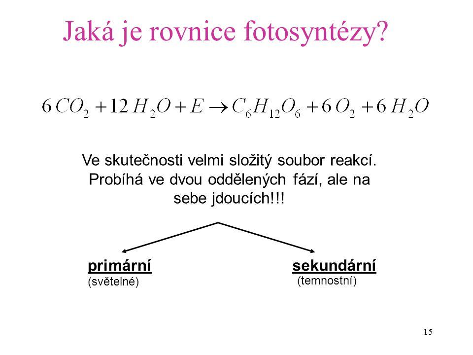 15 Jaká je rovnice fotosyntézy? primárnísekundární (světelné) (temnostní) Ve skutečnosti velmi složitý soubor reakcí. Probíhá ve dvou oddělených fází,
